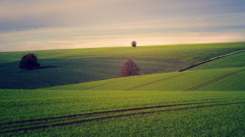 Fields, Tree, Hill, Sun, Landscape, Nature, Sky, Clouds