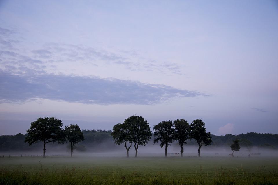 Landscape, Nature, Sky, Rest, Meadow, Graze, Tree