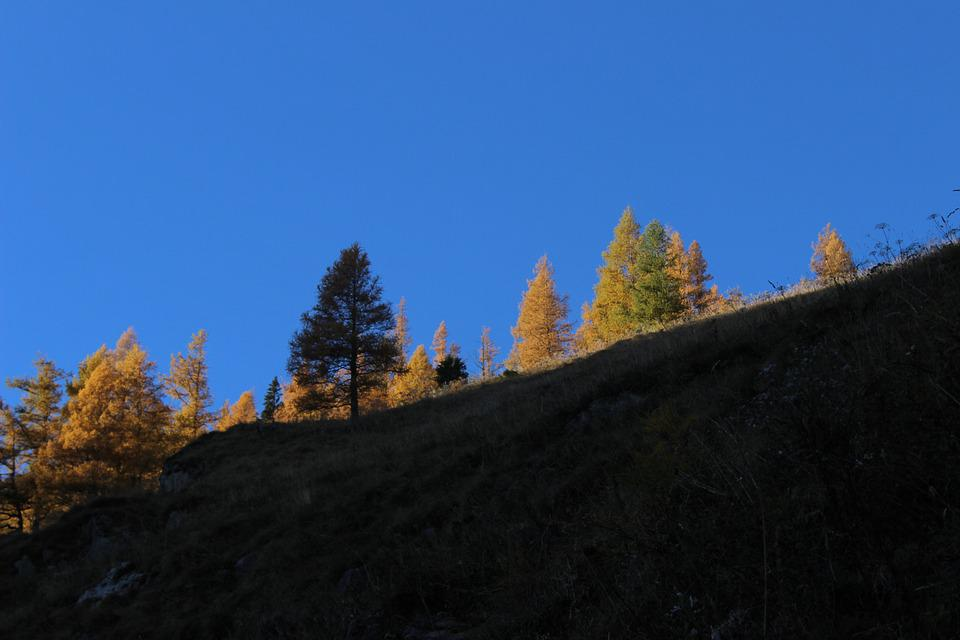 Trees, Autumn, Sky, Larches In The Evening Light