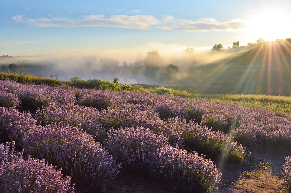 Field, Horizon, Lavender, Dawn, Nature, Hill, Sky