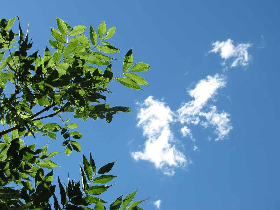 Sky, Nature, Clouds, Leaves, Branch, Tree, Blue
