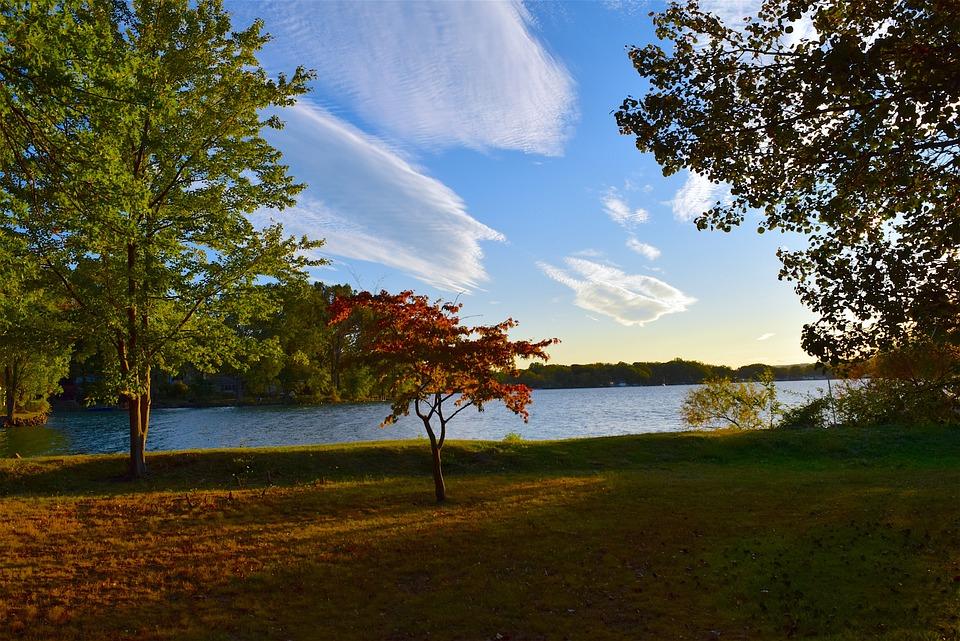 Tree, Lake, Sunset, Autumn, Sky, Nature, Light