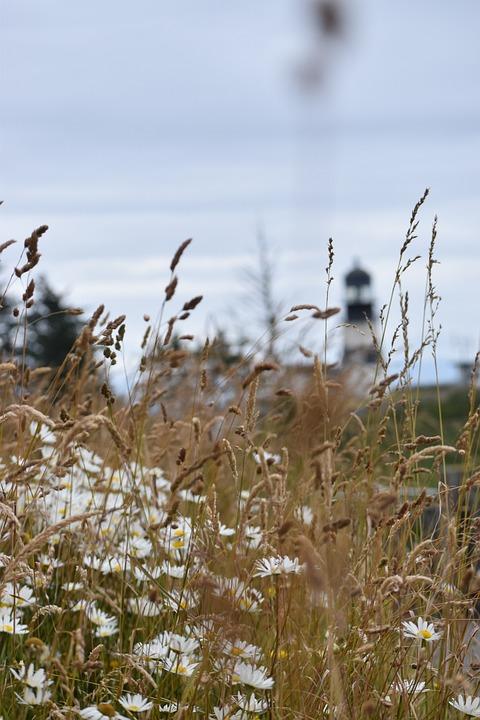 Flowers, Field, Meadow, Lighthouse, Sky, Clouds
