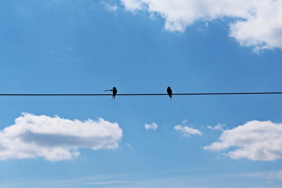 Swallows, Pair, Sky, Blue, Clouds, Fly, Mood, Birds