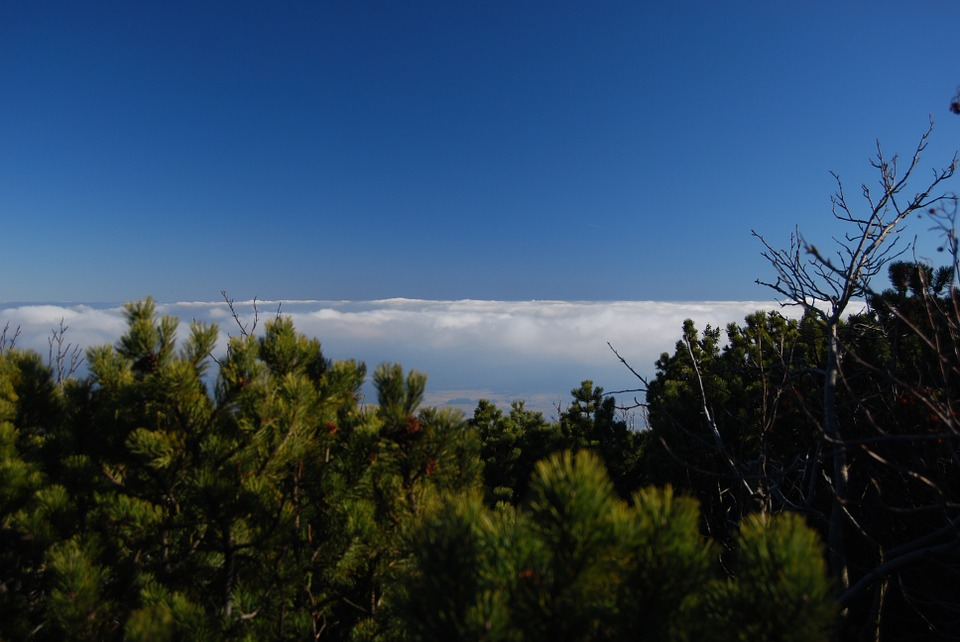 Clouds, Above The Clouds, Mountain Pine, Sky, Blue