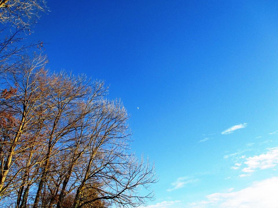 Trees, Sky, Nature, Bald Trees, Aesthetic, Thurgau