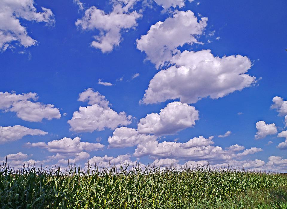 Summer, Sky, Cumulus Clouds, Cornfield, Nature