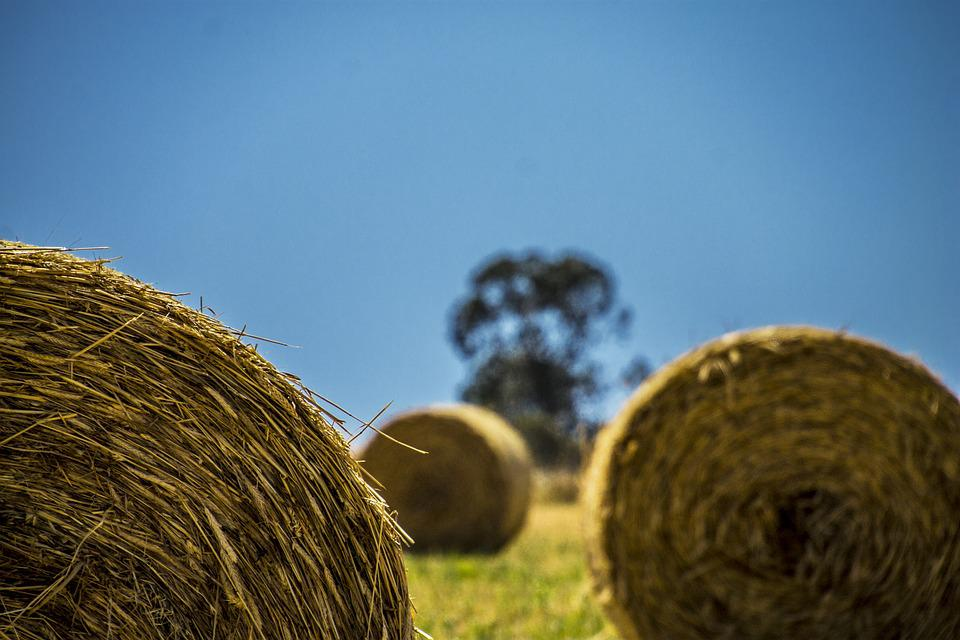 Nature, Sky, Grass, Outdoors, Crops, Field, Agriculture