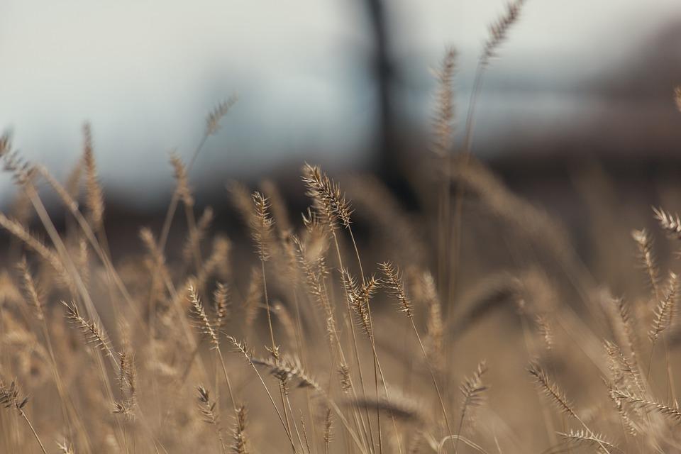 Nature, Grass, Sky, Yellow, Dry, Autumn