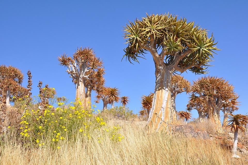 Tree, Nature, Flora, Landscape, Sky, Outdoors, Grass