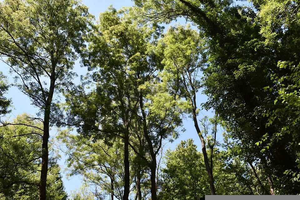 Sky, Green, Nature, Forest, Tree, Summer, Peace