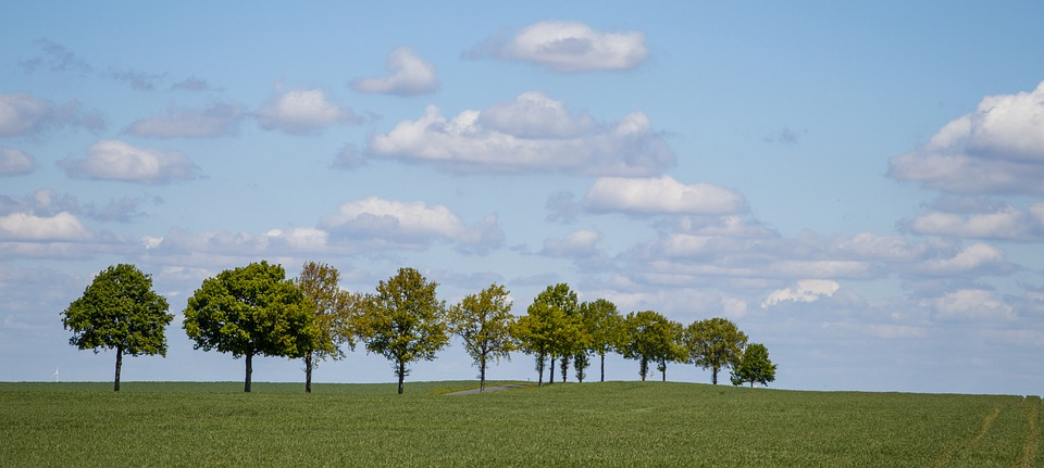Field, Avenue, Nature, Sky, Landscape, Trees, Green