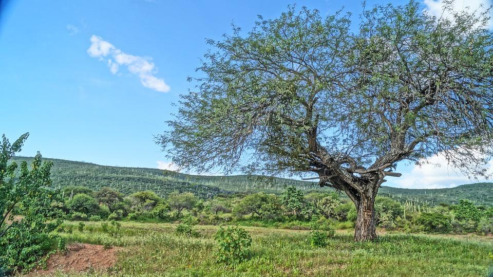 Tree, Nature, Sky, Trunk, Landscape, Leaves