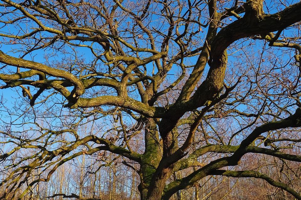 Landscape, Tree, Nature, Old Tree, Old, Gnarled, Sky