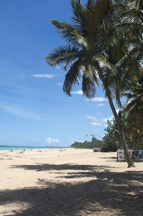 Palm Tree, Beach, Island, Holiday, Blue, Sky, Nature