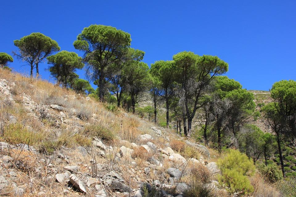 Nature, Tree, Landscape, Sky, Travel, Panorama, Plant