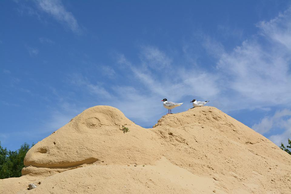 Sand, Birds, Sculpture, Sky, Nature, Animals