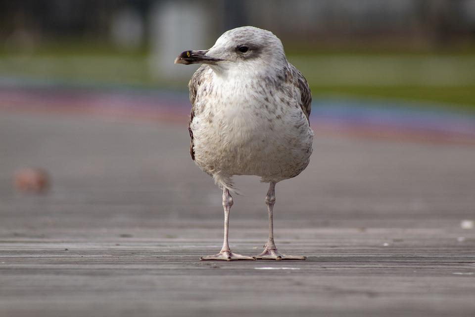 Seagull, Portrait, Animal, Nature, Bird, Sky, White