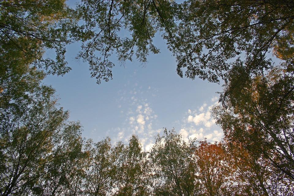 Krone, Tree, Sky, Nature