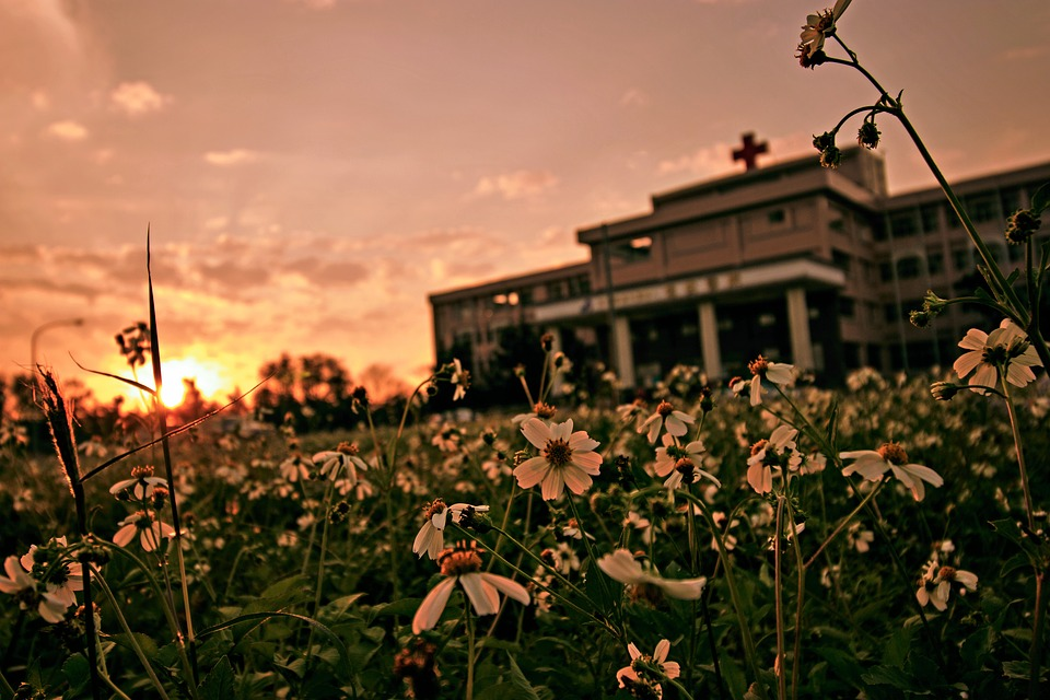 Outdoor, Sky, Flower, Landscape