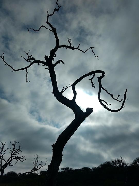 Tree, Nature, Wood, Silhouette, Outdoors, Sky