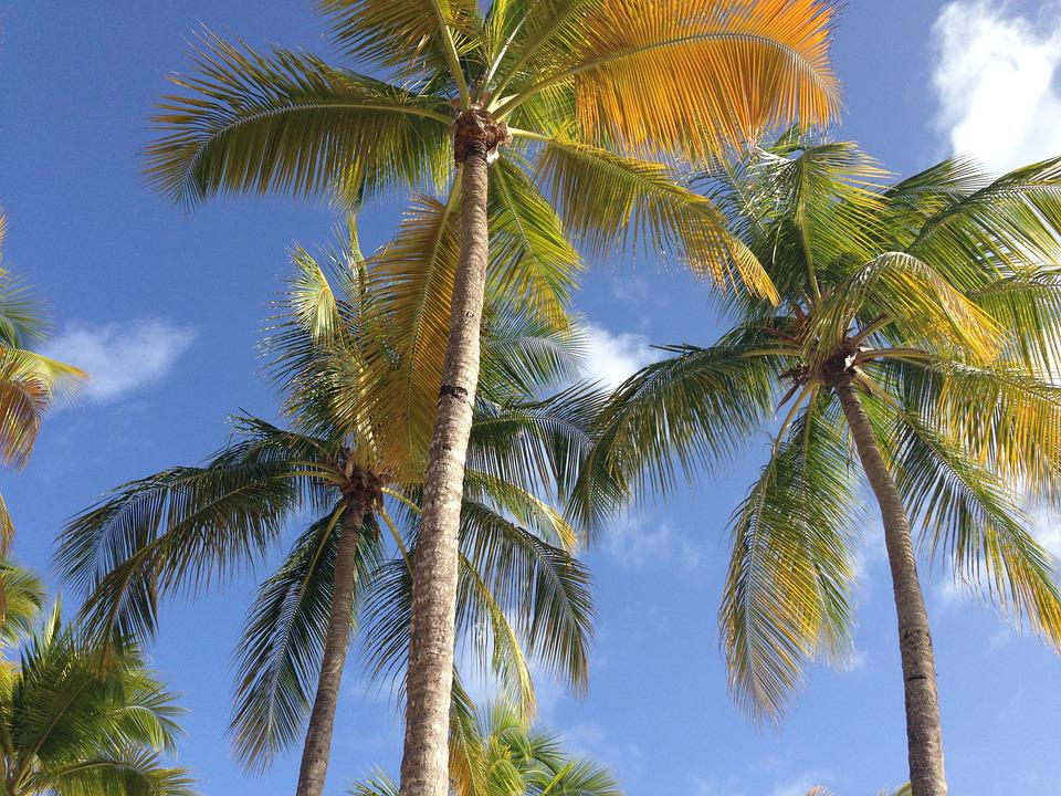 Palm, Sky, Holiday, Summer, Light, Exotic, Cloud