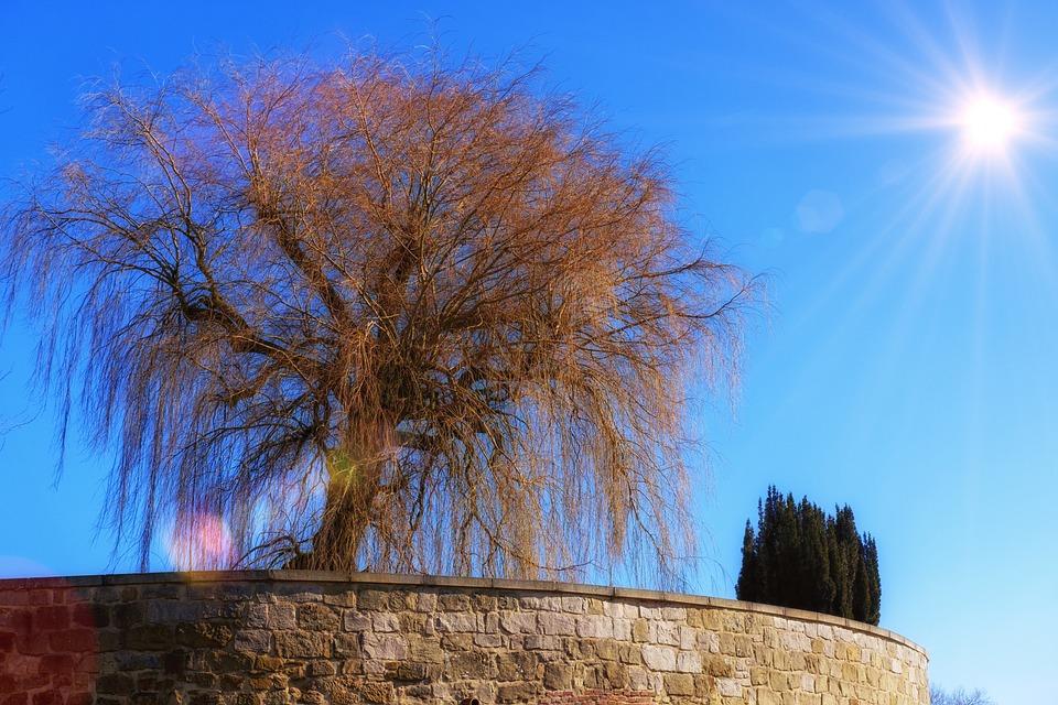 Tree, Pasture, Weeping Willow, Sun, Sunbeam, Sky
