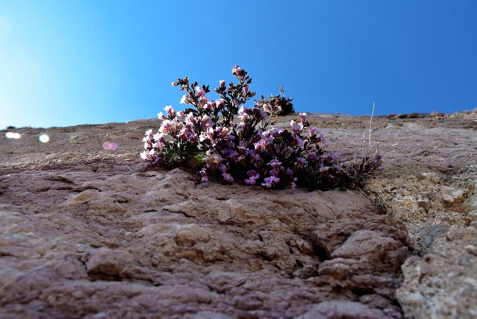 Flower, Wall, Castle, Pink Flowers, Sky