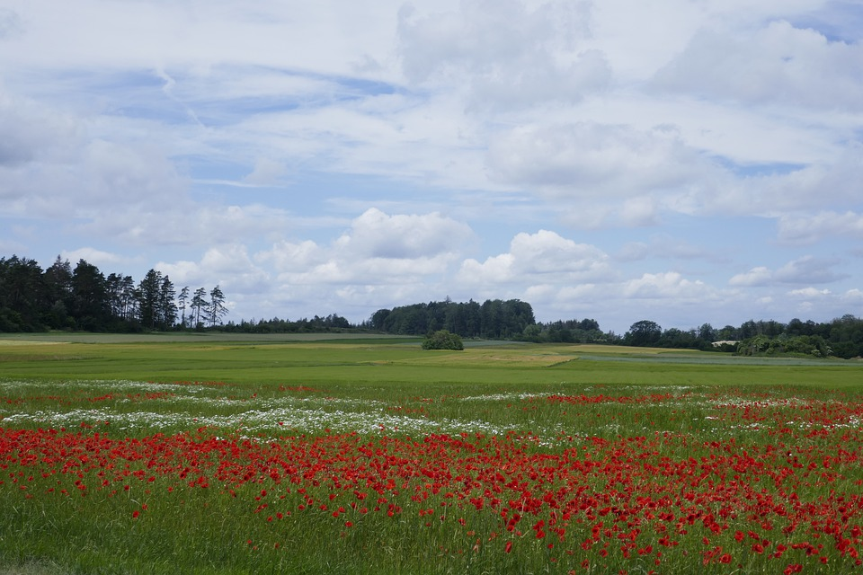 Landscape, Field Of Poppies, Sky, Poppy, Nature