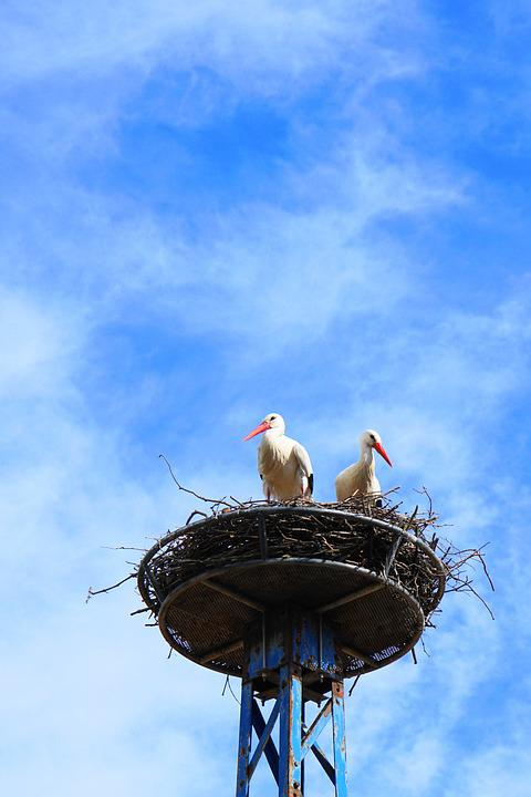 Storks, Birds, Nest, Sky, Clouds, Stork, Rattle Stork