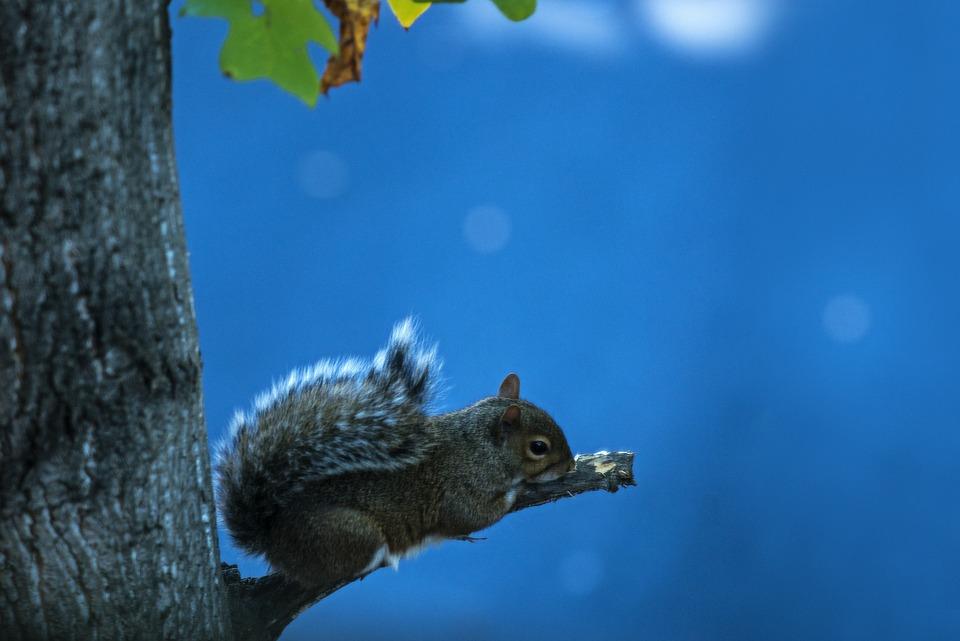 Squirrel, Animal, Rodent, Sky, Resting, Wild, Wildlife