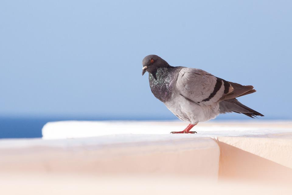Dove, Parapet, White, Sky, Sea, Blue