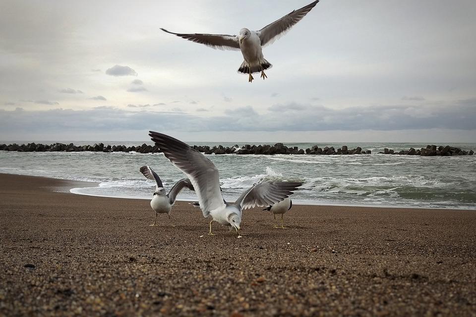 Morning, Sky, Cloud, Sea, Beach, Seagull, Seabird