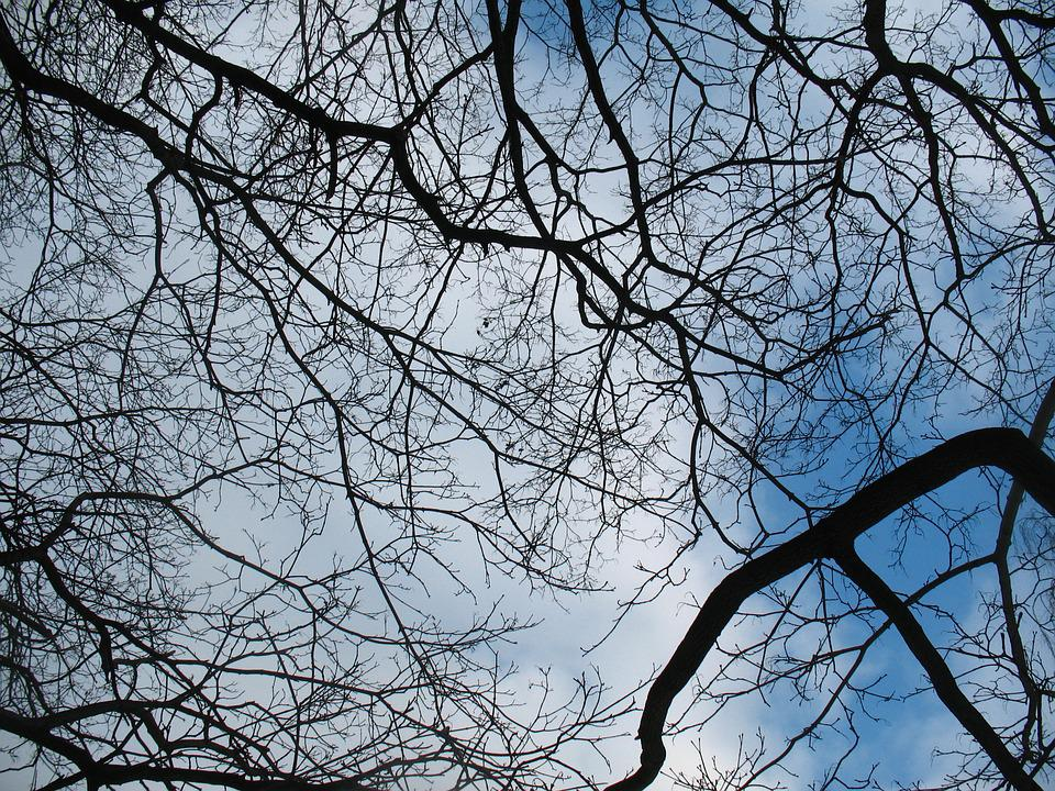 Branches, Silhouette, Sky, Blue, Black, Nature, Trees