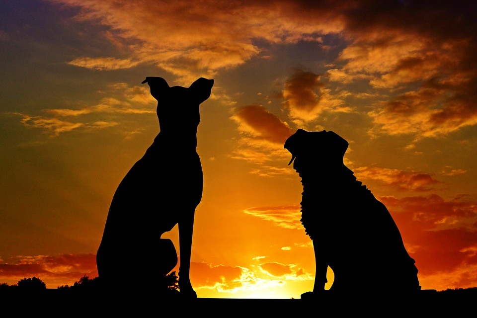 Dogs, Animals, Sunset, Silhouette, Back Light, Sky