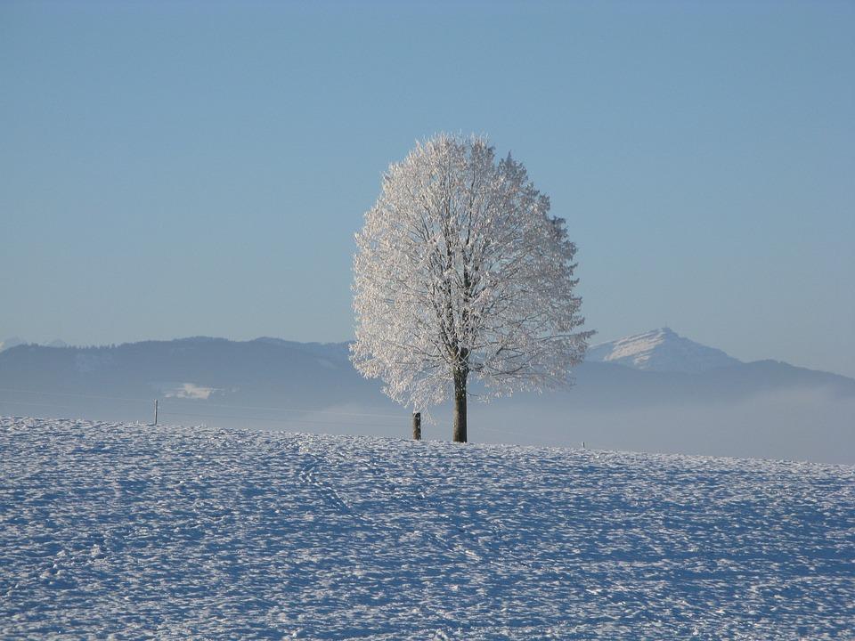 Winter, Snow, White, Cold, Sky, Tree, Snowy, Wintry