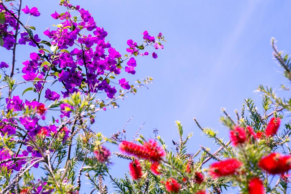 Spring, Garden, Flowers, Flower, Spring Flowers, Sky