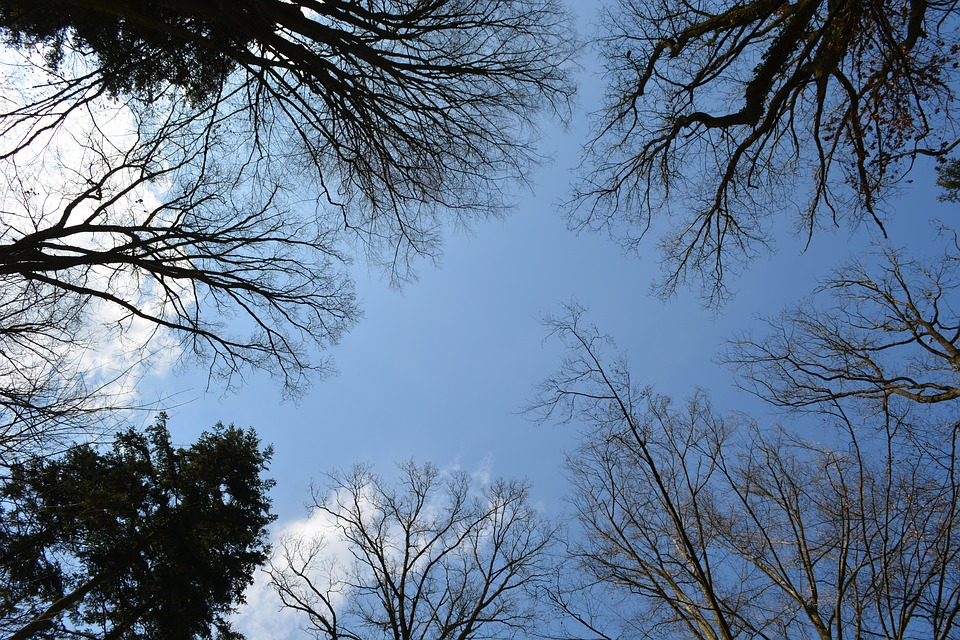 Forest, Trees, Sky, Canopy, Leaves, Clouds, Spring