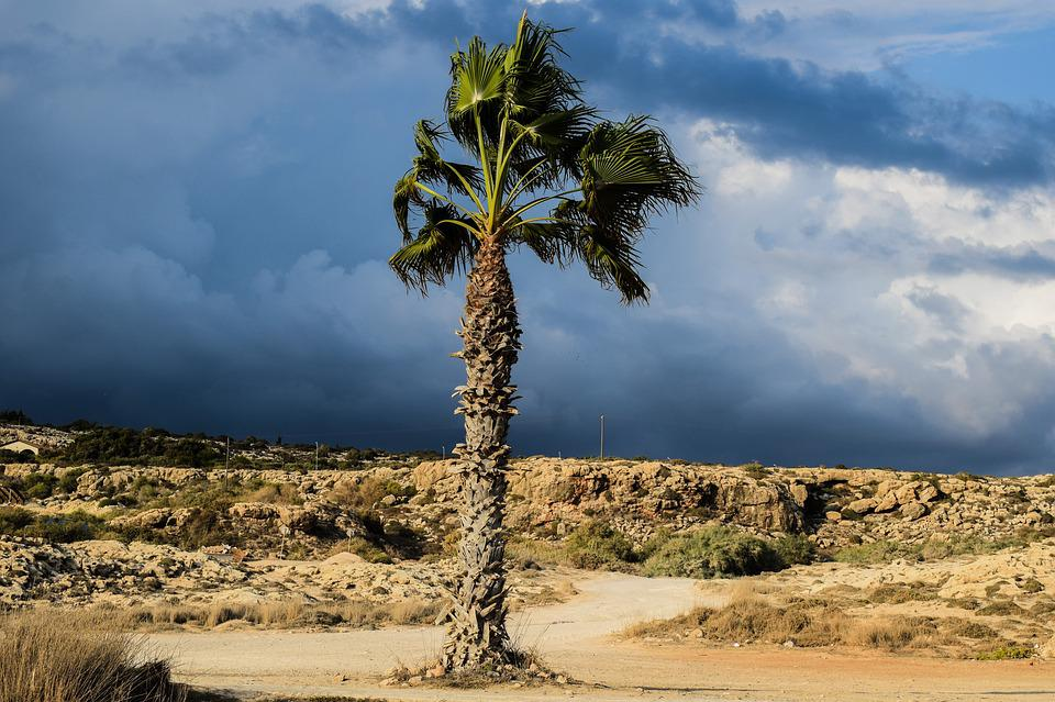 Palm Tree, Sky, Clouds, Stormy, Autumn, Nature