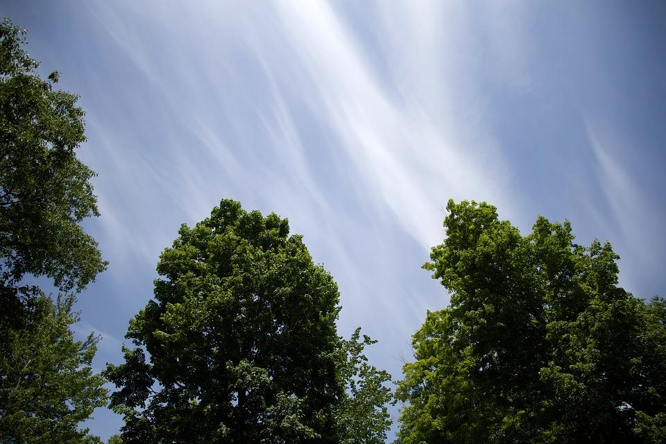 Trees, Sky, Foliage, Nature, Summer, Blue, Season