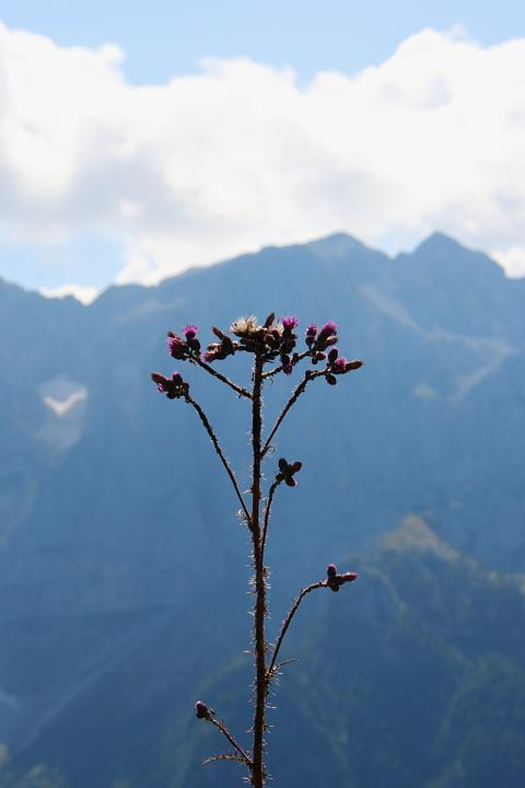 Flowers, Mountain, Summer, Flower, Nature, Sky