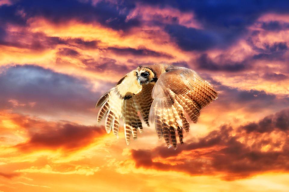 Owl, Flight, Sunrise, Sunset, Sky, Sun, Flying, Nature