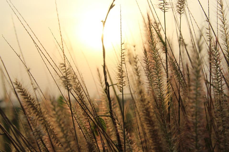Sunset, Sky, Sunrise, Landscape, Sun, Dawn, Nature