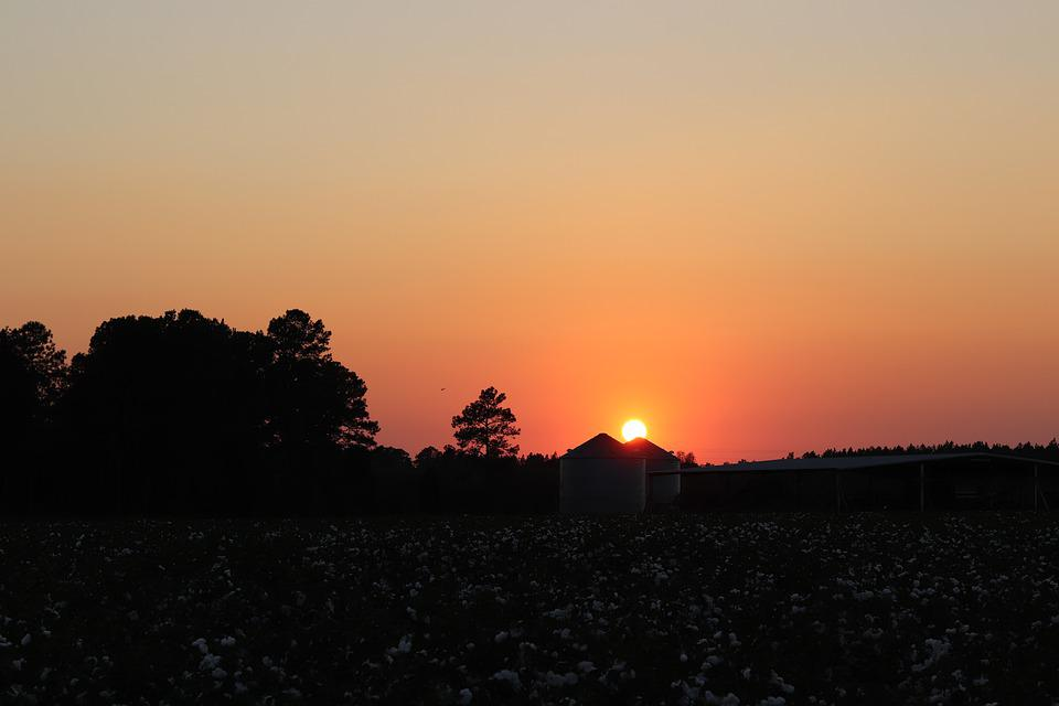 Sunset, Sky, Cotton Field, Georgia, Autumn, Harvest