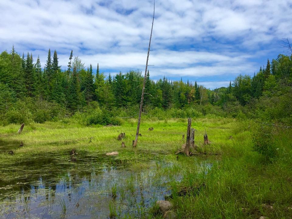 Wilderness, Forest, Sky, Water, Bog, Swamp, Wild, Green