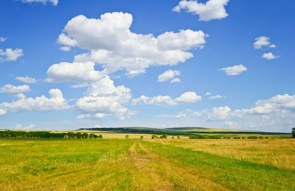 Summer, Field, Sky, Clouds, Outdoors, Tranquil