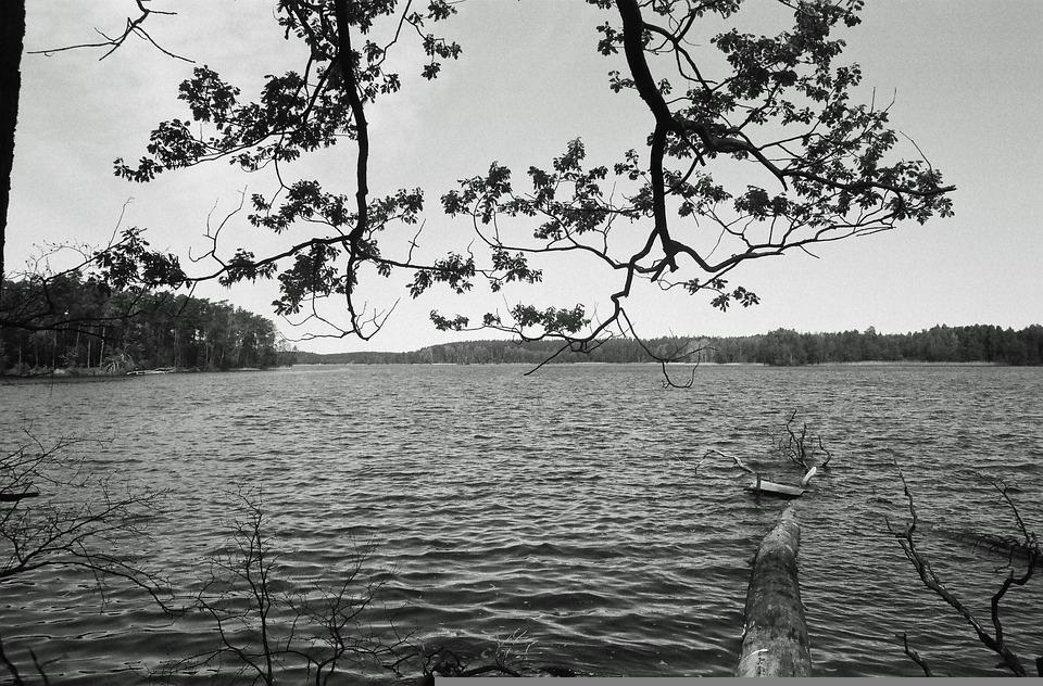 Tree, Water, Lake, Sky, Forest, Nature