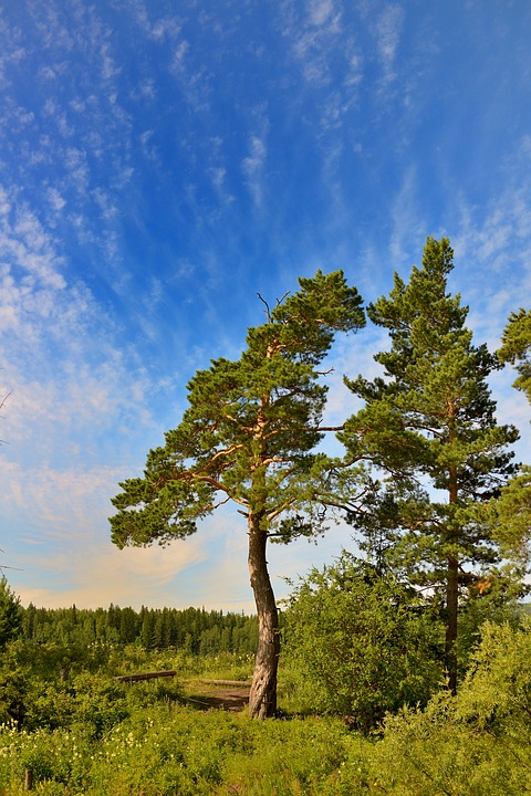 Tree, Nature, Yakutia, Landscape, Sky