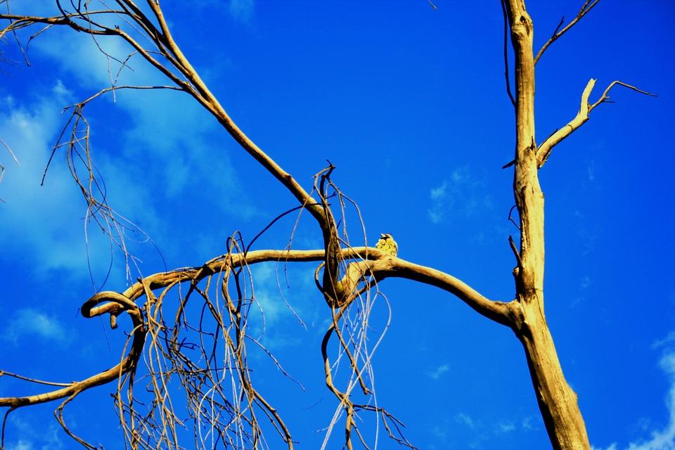 Tree, Old, Dead, Dry, Sky, Blue