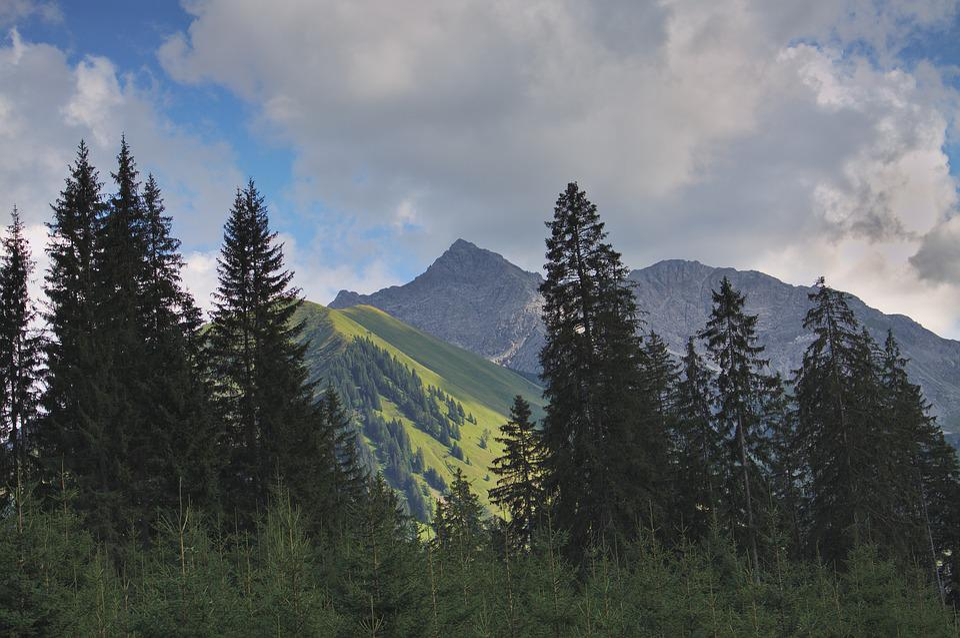Free Photo Sky Trees Mountains Alpine Austria Spruce Firs Max Pixel